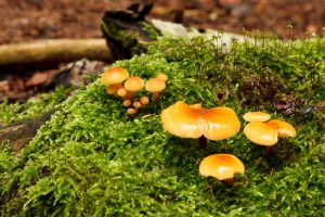 PWC Foraging Expedition & Cooking Demo @ Egerton - further details nearer the time